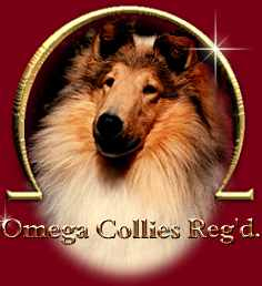 Omega Collies Reg'd.